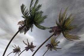 hurricane tag