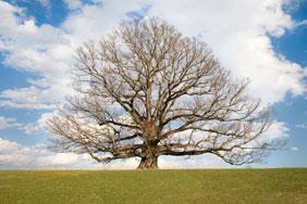 oak tag