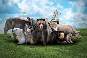 zoo tag
