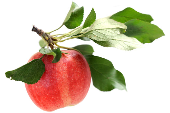 Red Apple on a Stem, with Green Leaves