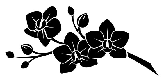 Black Orchids Silhouetted on White