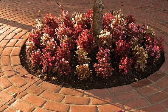 Circular Brick Walk Around a Circular Garden