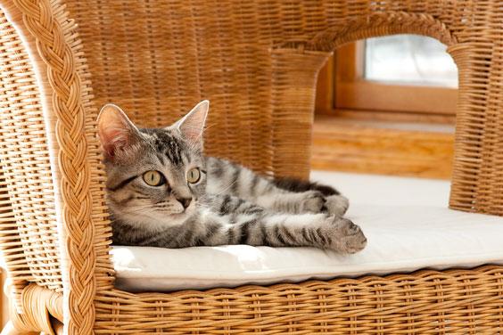 Kitten Reclining in Comfort