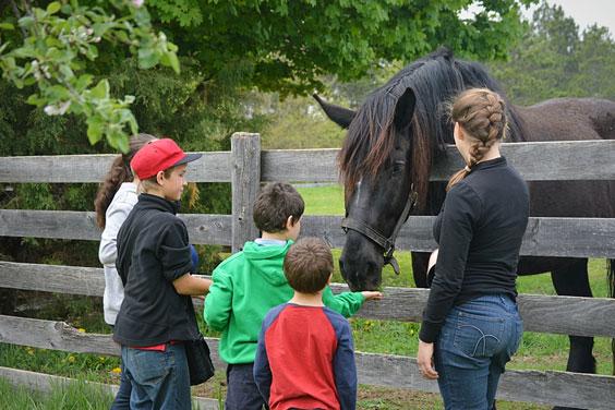 Children Feeding a Horse