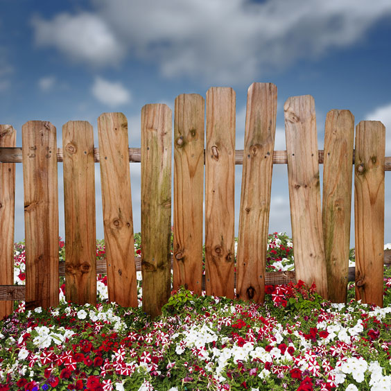 Wooden Fence Amidst Petunia Flowers