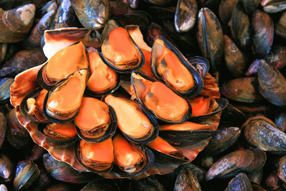 Mussels Served with Flair