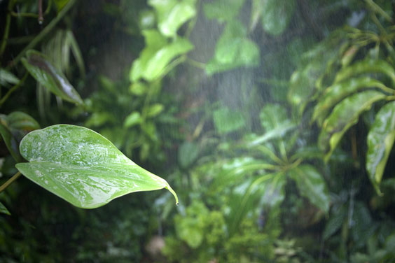 Humid Rain Forest