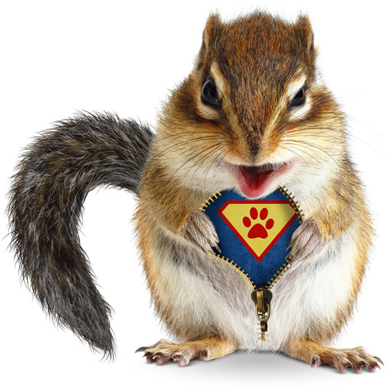 Super Hero Squirrel