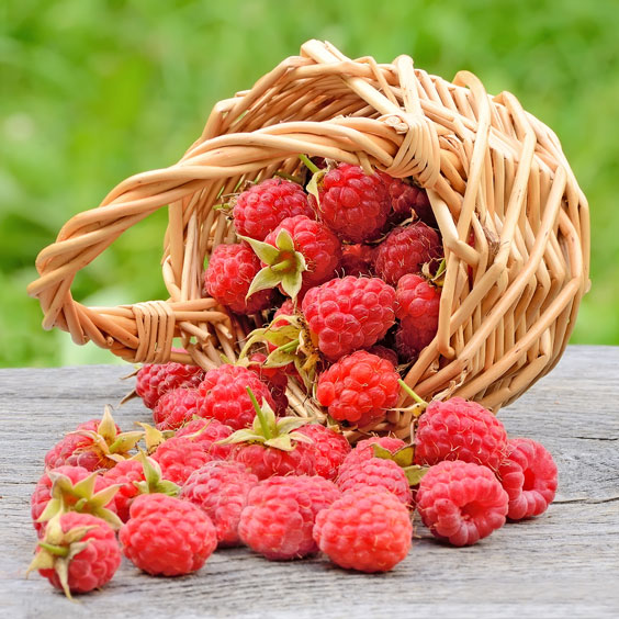 Red Raspberries in a Wicker Basket