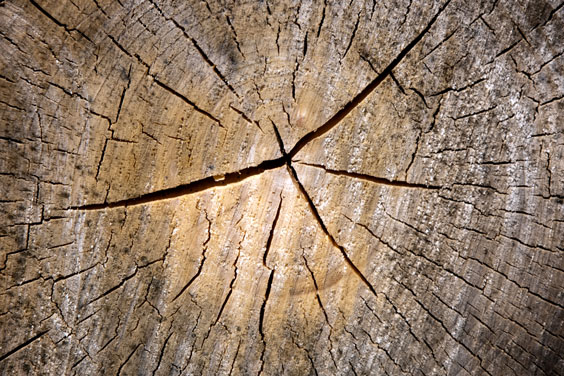 Wood Log Cross Section