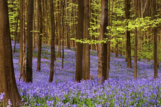 Woods in Springtime